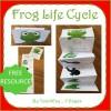Frog Folding Life Cycle Activity